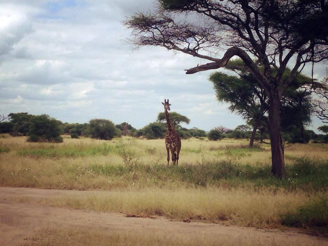 Auslandspraktikum in Tansania