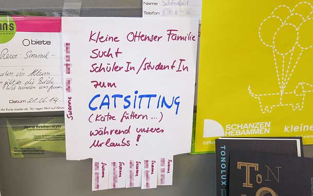 catsitting-608-hh.jpg