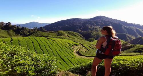 Veel studenten willen in het buitenland studeren, slechts minder dan de helft vertrekt