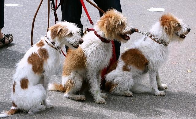 Studentenjob Haustiersitter von Hunden