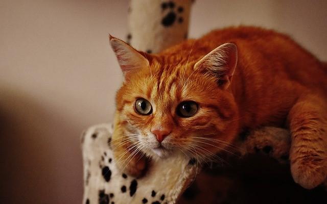 Studentenjob Haustiersitter von Katzen
