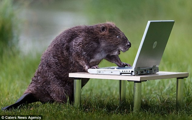 Mole using mini laptop